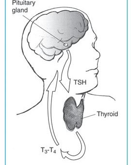 Dlaczego badany nie tylko TSH, ale i Ft3 i Ft4